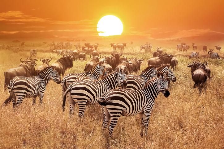 Blog de Viajes a Tanzania