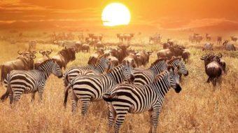 Viaje a Kenia, Tanzania y Zanzíbar. Puente de Diciembre. El Sueño de África Premium