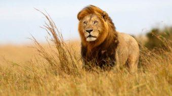 Viaje a Kenia y Tanzania. Safari. Ext opcionales a Zanzíbar, Mauricio o Seychelles