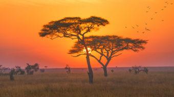 Viaje a Kenya, Tanzania y Zanzíbar.  En camión. El sueño de África premium