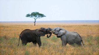 Viaje a Uganda, Kenia, Tanzania y Zanzíbar. En camión. Ruta Lago Victoria 23 días