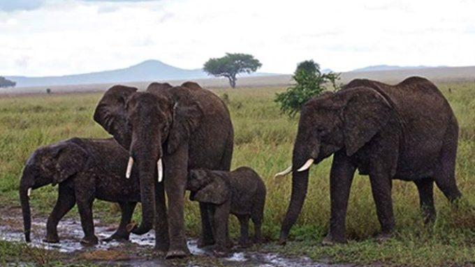 Viaje a Tanzania - Safari Fotográfico