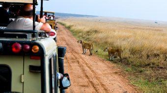 Safari de aventura en Tanzania. Soñar en África