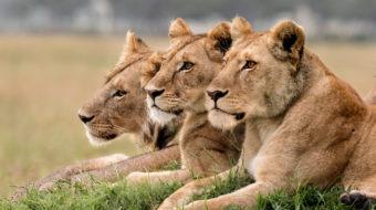 Viaje a Kenya y Tanzania. En camión. Wild Safari 14 días