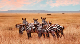 Viaje a Kenia, Tanzania y Zanzíbar. En camión. Ruta memorias de África clásico 15 días