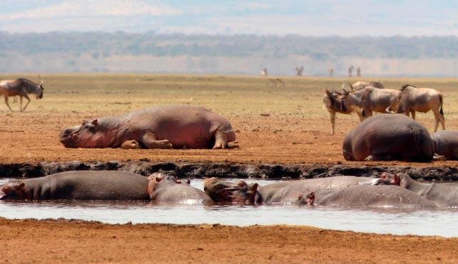 Viaje a Tanzania a medida - Atardecer en la gran Sabana