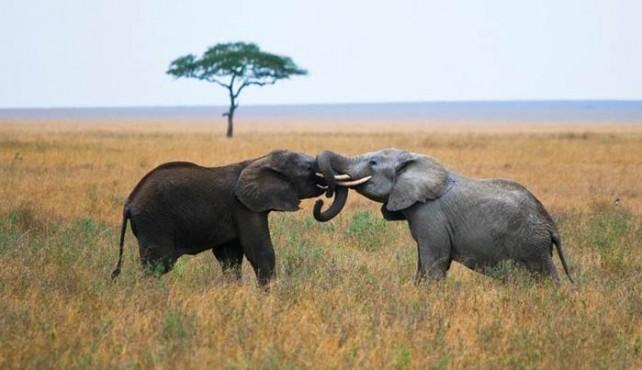 Viaje a Tanzania - Ciencia y Aventura Hacia la Cuna de la Humanidad