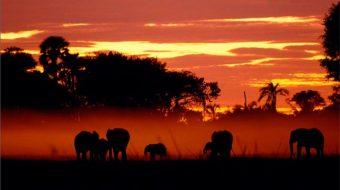 Viaje de Ciencia y Aventura en Tanzania. Exploradores del pasado.