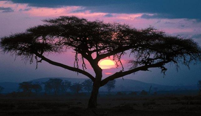 Viaje a Tanzania - Ciencia y Aventura Exploradores del Pasado