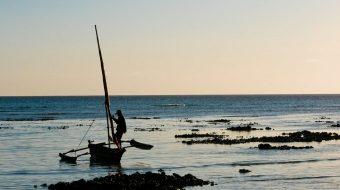 Viaje a la Isla de Pemba. Extensión Isla de Pemba