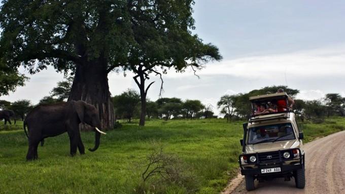 Safari + Trekking en Tanzania