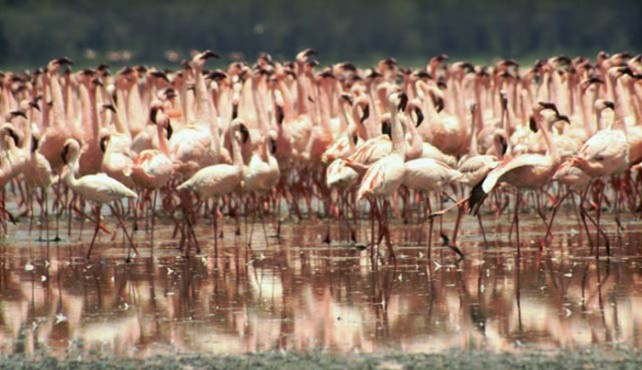 Viaje a Tanzania y Kenia en grupo - Wild Safari en Camión