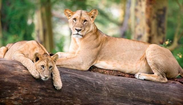 safari en camión por kenia y Tanzania