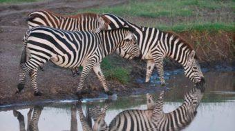 Viaje a Tanzania, Kenia y Zanzíbar. En Grupo. Memorias de África Clásico y Confort en Camión