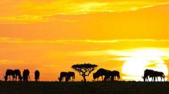 Viaje a Tanzania, Kenia y Zanzíbar. En grupo. El sueño de África premium en camión
