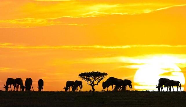 Ruta en camión por Kenya, Tanzania y Zanzíbar