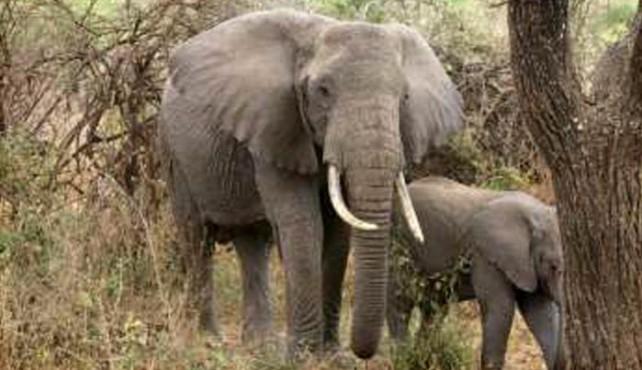 Viaje a Tanzania a medida - Safari Migraciones y Etnias