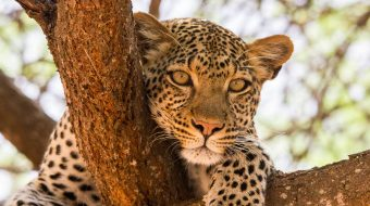 Viaje a Tanzania. Atardecer en la Gran Sabana