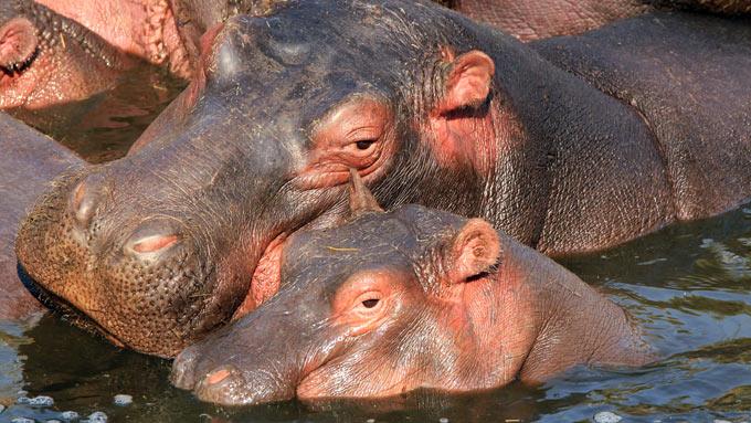 Viaje de novios a Tanzania con safari