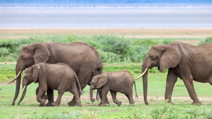 Viaje a Tanzania para novios - Safari, Bosquimanos y Playa
