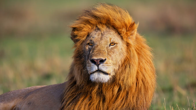 Viaje a Tanzaniapara novios - Safari y Masais
