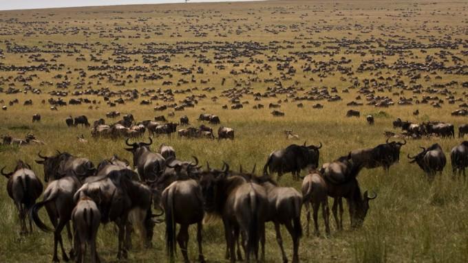 Viaje a Tanzania - Safari Ecoturismo Vive África
