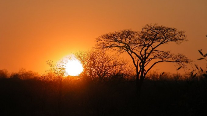 Safari Sabana Africana tanzania