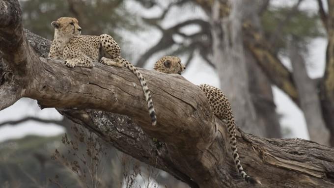 Viaje a Tanzania - Safari Gran Sabana Africana