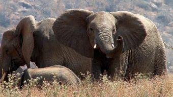 Viaje de Safari en el Inmenso Sur de Tanzania