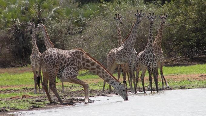 Viaje a Tanzania - Safari Inmenso Sur