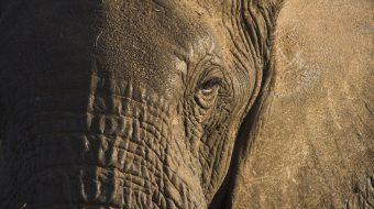 Viaje de Safari en Tanzania. Sendas Africanas