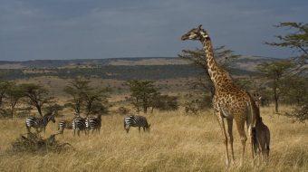Viaje a Tanzania. Safari ¡Ven a África!