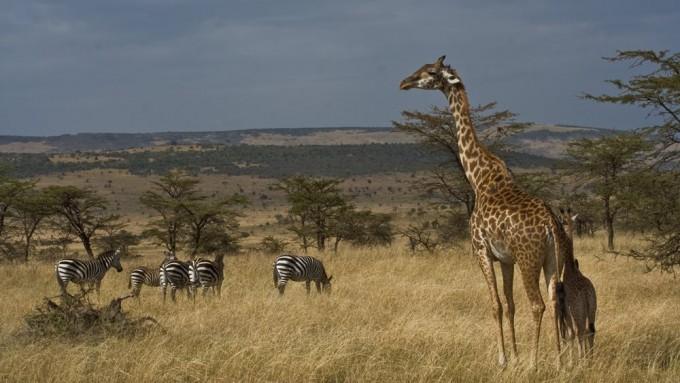 Viaje de Safari a Tanzania 7 días