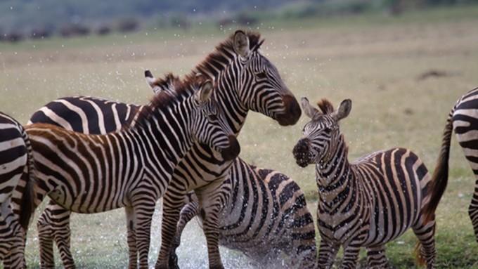Viaje a Tanzania - Safari ven a África