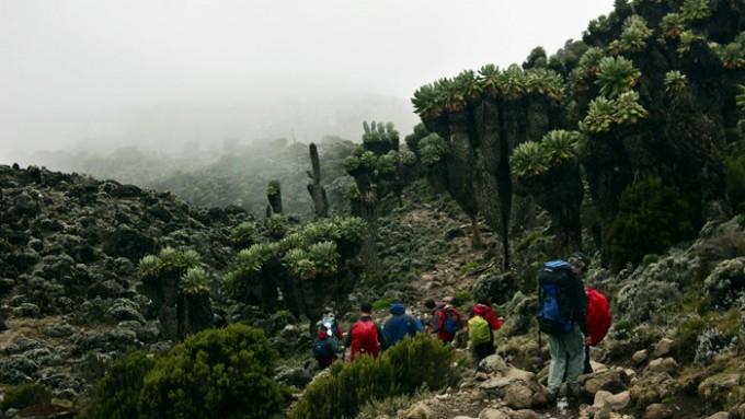 Viaje a Tanzania - Trekking Kilimanjaro Marangu