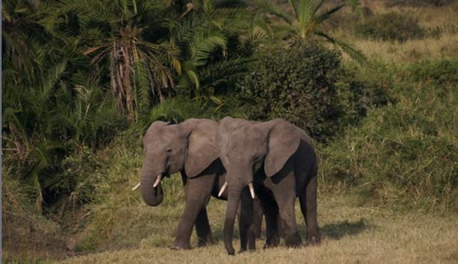 Viaje a Tanzania y Zanzíbar - Grupo Verano 4x4