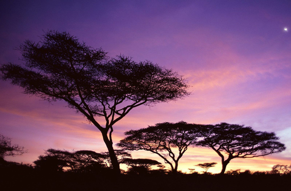 fauna de tanzania y flora