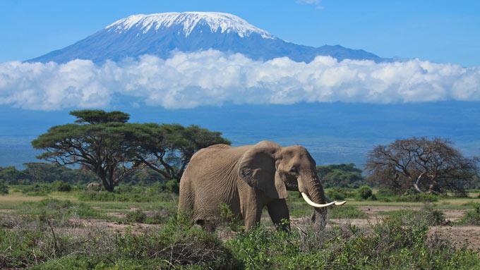 Parque Nacional del Kilimanjaro tanzania