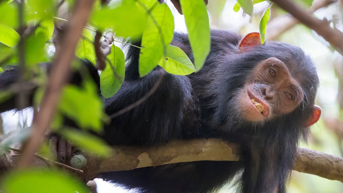 Viajes a Tanzania - Parque Nacional Mahale