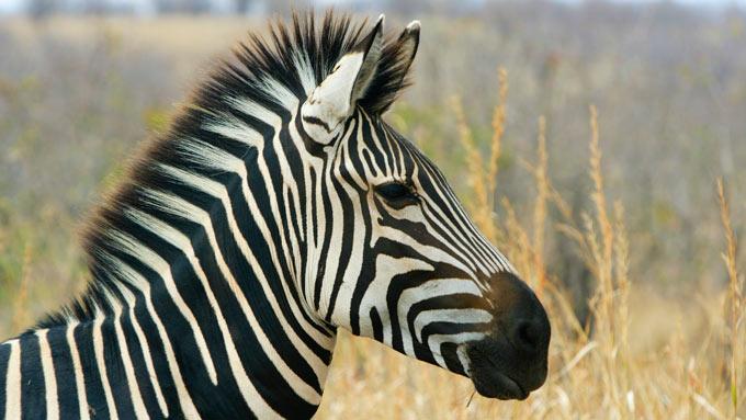 Viajes a Tanzania - Parque Nacional Ruaha y Rungwa