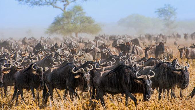 Parque Nacional Serengeti tanzania