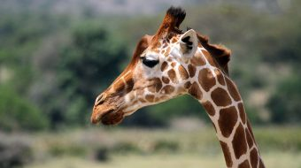 Parques y Lagos del Norte de Tanzania