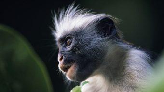 Viajes a Tanzania. Safaris Ciencia y Aventura