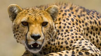 Viajes a Tanzania. Safaris Norte