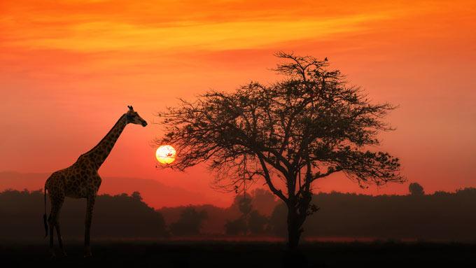 Viajes a Tanzania